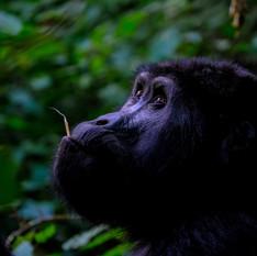 10. Lom Pangar (Cameroon)