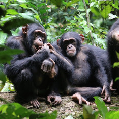 1. Koukoutamba (Guinea)