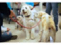 Pets 7.jpg