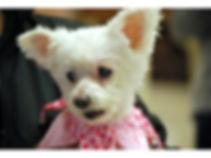 Pets 3.jpg