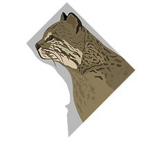 bobcat for site.png