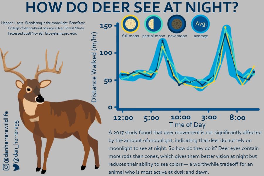 Herrera Wildlife - Deer