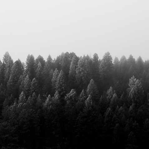 Lincoln Forest, New Mexico