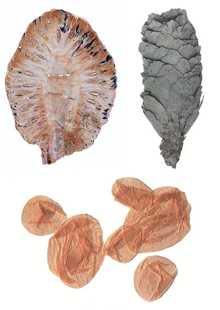 fossil plate2.jpg