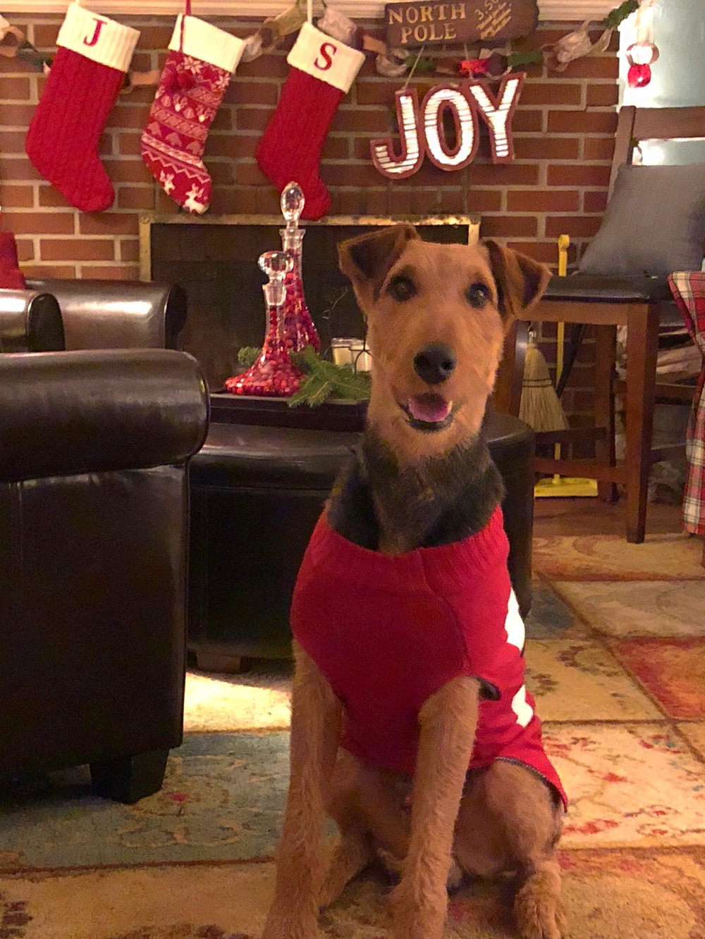 Sawyer in Christmas sweater in front of fireplace