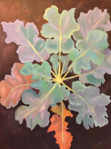 Broccolli Plant
