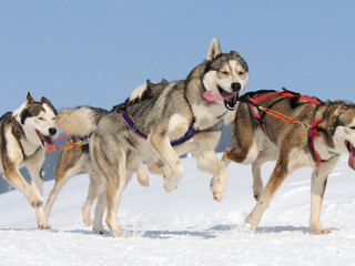 I Went Dog Sledding and This is What I Learned (and it's not What you Think)