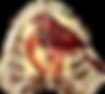 Vox%252520for%252520website_edited_edite