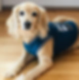 Rubi Therapy Dog  - Play Therapy Melbourne