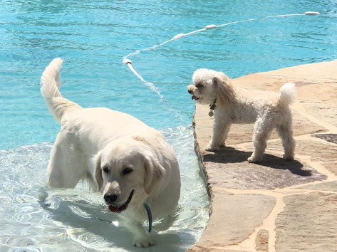 Stella and Saint in pool