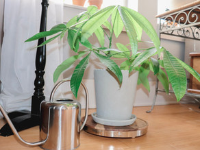 How To Stop Overwatering Your Plants