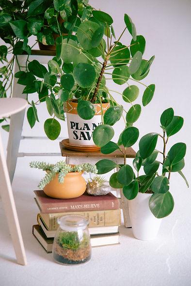 Plant Savvy-16.jpg