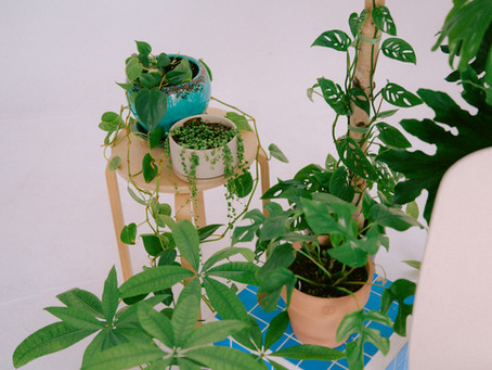 Small Businesses To Support: Houseplant Edition