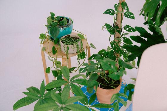 Plant Savvy-15.jpg