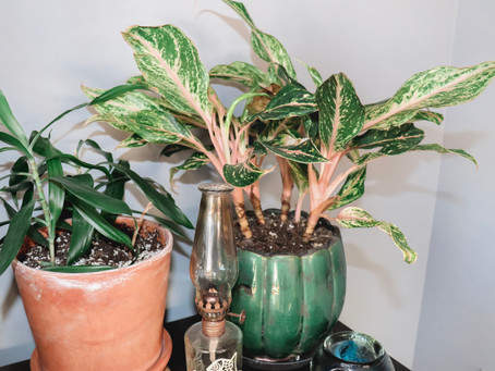 3 Tips for Increasing The Humidity Around Your Plants