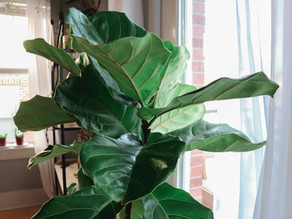 Preparing Houseplants For Spring: You've Survived Winter. Now What?
