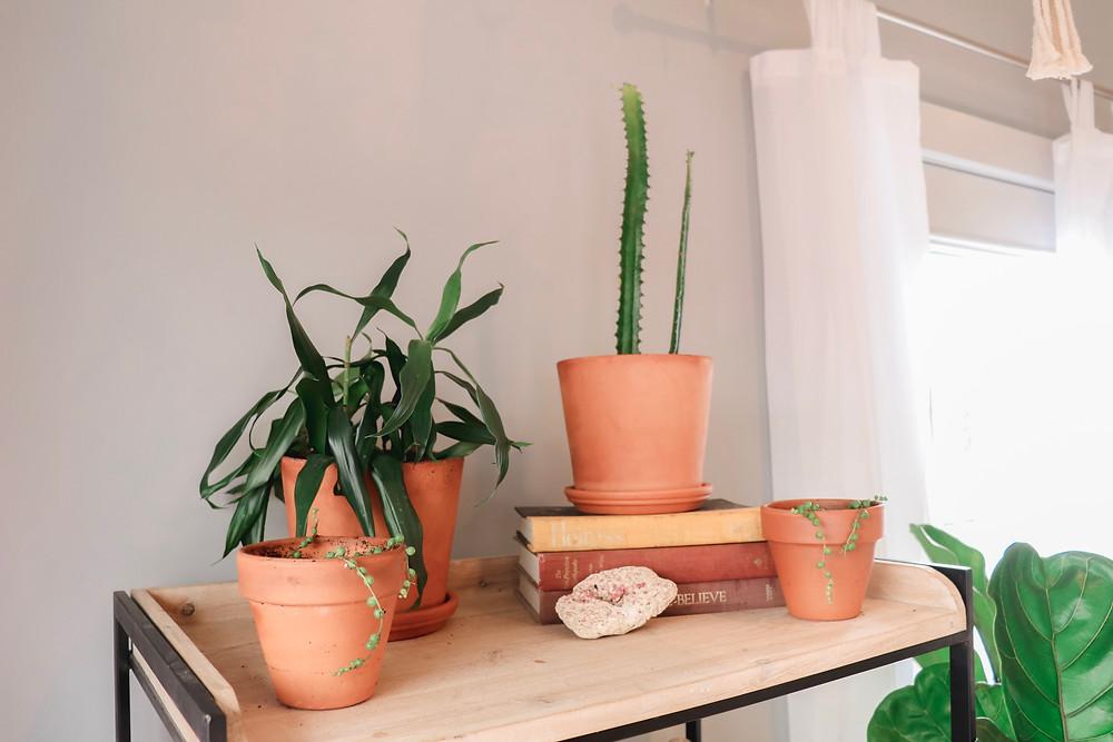Terra Cotta planters together