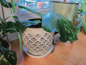 Increasing Soil Aeration: Should You Use an Aeration Planter For Your Houseplants?