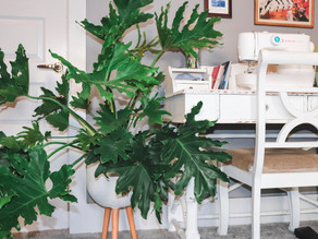 Plant Styling Tips To Bring Your Space To Life!