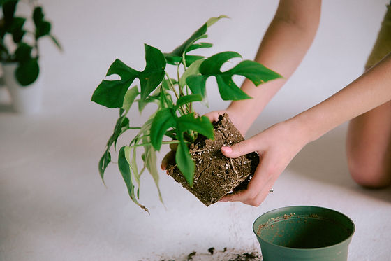 Plant Savvy-18.jpg