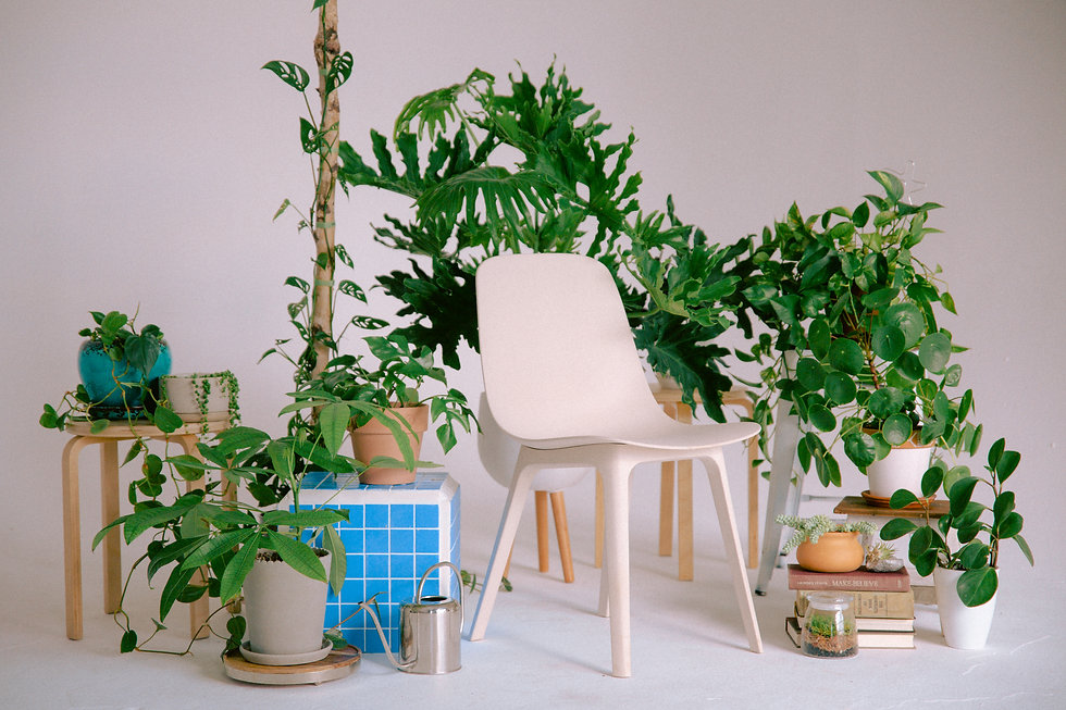 Plant Savvy-13.jpg