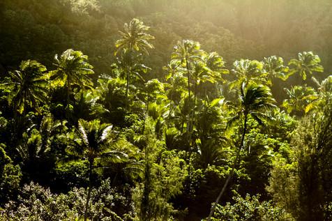 kauai photographer (73 of 118).jpg