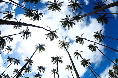kauai photographer (51 of 118).jpg