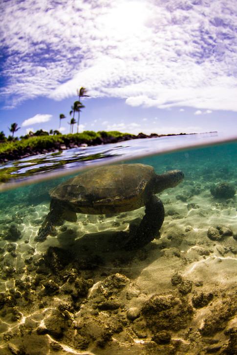 kauai photographer (107 of 118).jpg