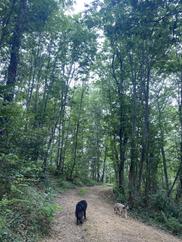 Forêts Bee-Bois