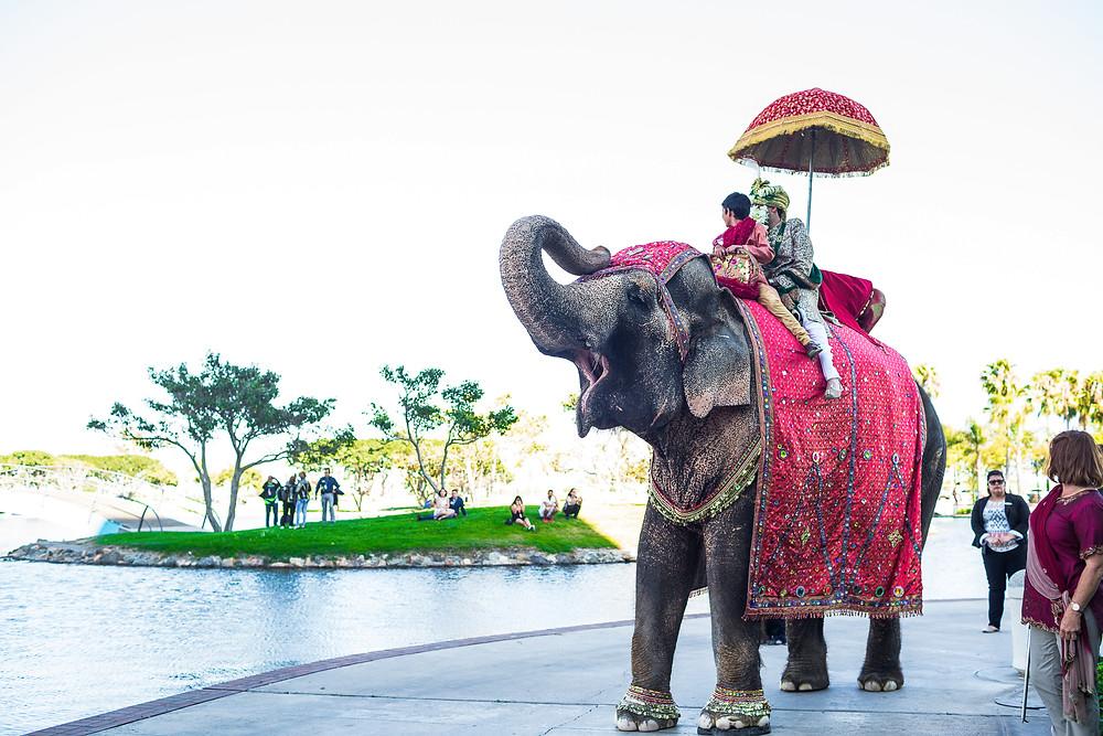 Baraat Indian wedding Tips usa
