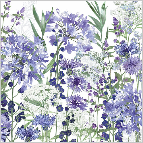 Agapanthus Meanderings Card