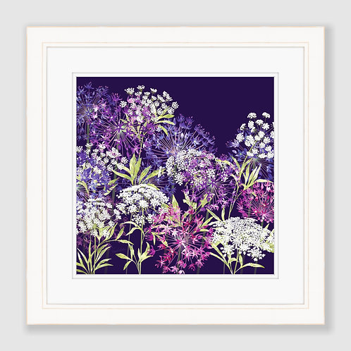 Allium and Ammi Nights Print