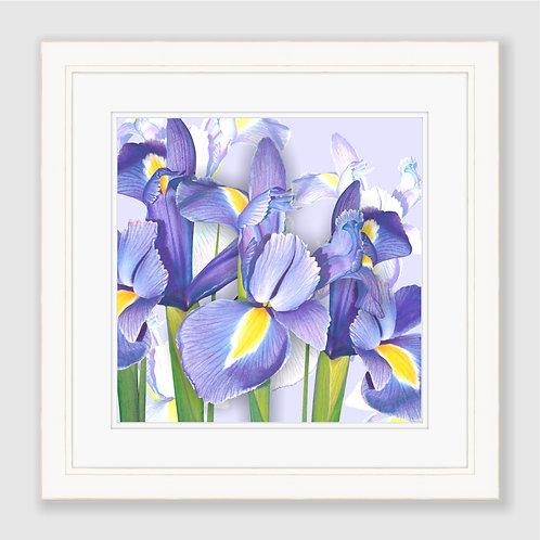 Springtime Irises Print