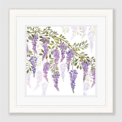 Wisteria Blossoms Print
