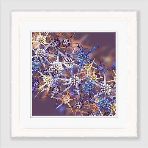 Blue Eryngiums Print