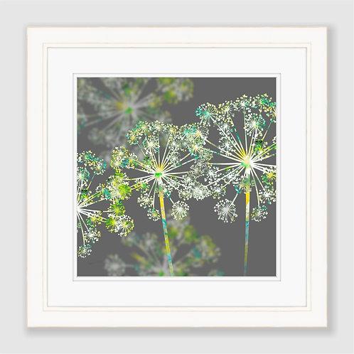 Apiaceae Print