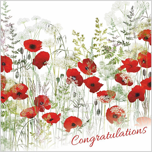 Flower Art / Floral Congratulations Card 'Poppy Field' (Poppies, Poppy, Red Poppies, Cow Parsley, Grasses)