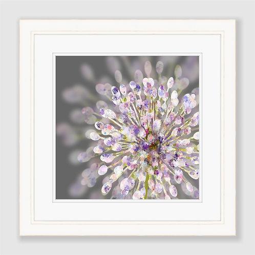 Allium Print