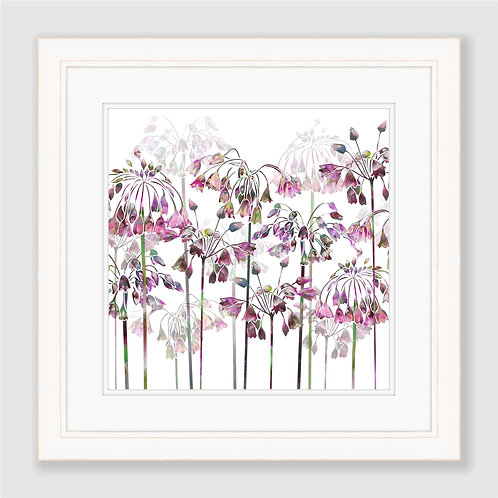 Allium Bells Print