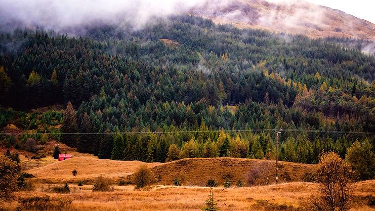 pine trees (1 of 1).jpg