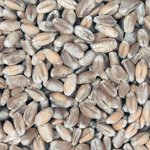 Organic Wheat Grain (Wheatberries)