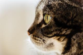 claudia-schweizer-katzenverhaltensberatung-katzenfotografie-katze-tigerli