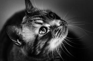 claudia-schweizer-katzenverhaltensberatung-katzenfotografie-tierfotografie