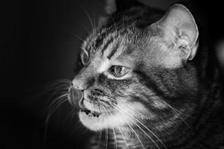 claudia-schweizer-katzenverhaltensberatung-katzenfotografie