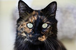 claudia-schweizer-katzenverhaltensberatung-katzenfotografie-katzenberatung
