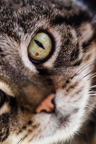 claudia-schweizer-katzenverhaltensberatung-katzenfotografie-katzenfotografin