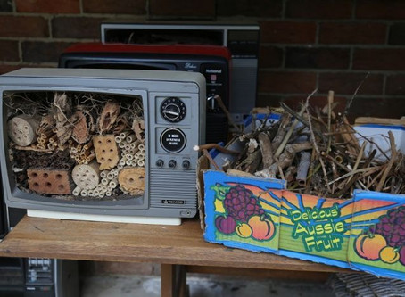 ABC News Report on our collection of native bee habitat retro TV's.