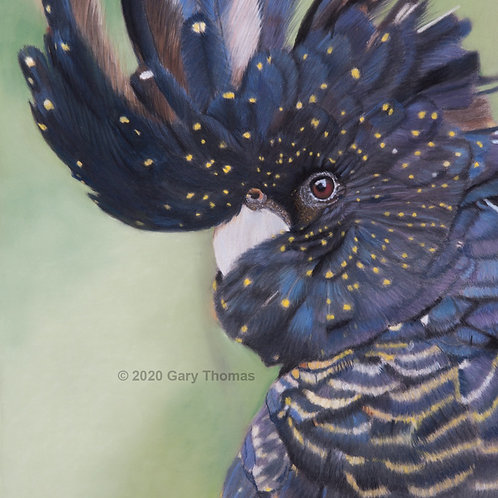 Black Cockatoo A2 L.E. Print