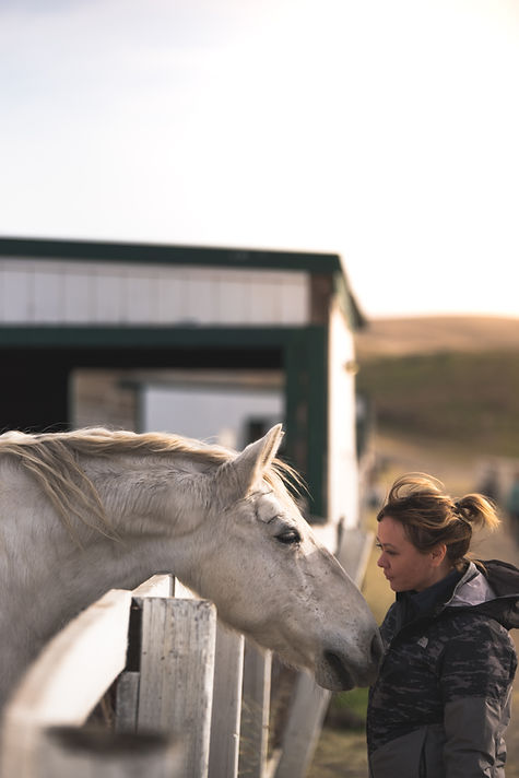 Gentle Rein Therapies, Equine Facilitated Psychotherapy, Clinical Psychotherapy and Hypnotherapy, Mount Eliza and Pearcedale, Victoria