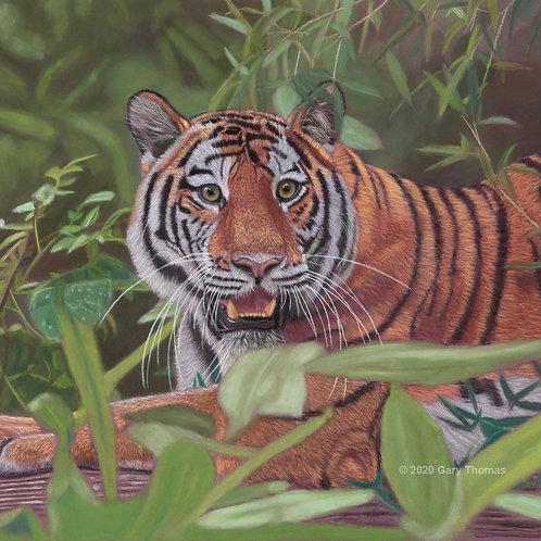 Siberian Tiger (original pastel-Framed)